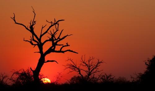 Un'americana in… Botswana!