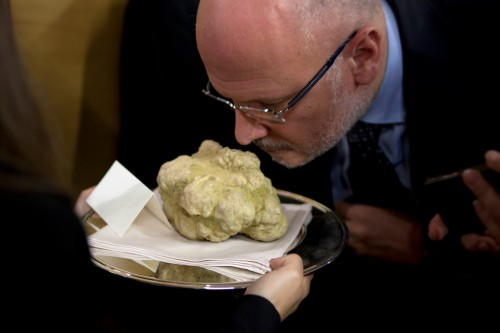 The White Truffle of Alba International Auction